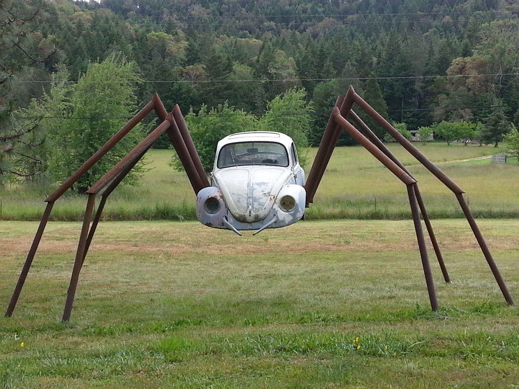 Spider, Wolf Creek, OR